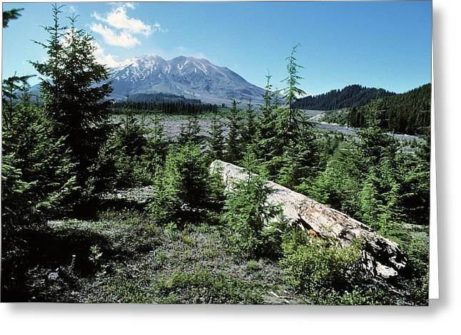 Mount St Helens Lahar Area Regrowth Greeting Card by Dr Juerg Alean