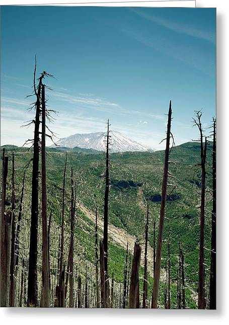 Mount St Helens Volcano And Dead Trees Greeting Card