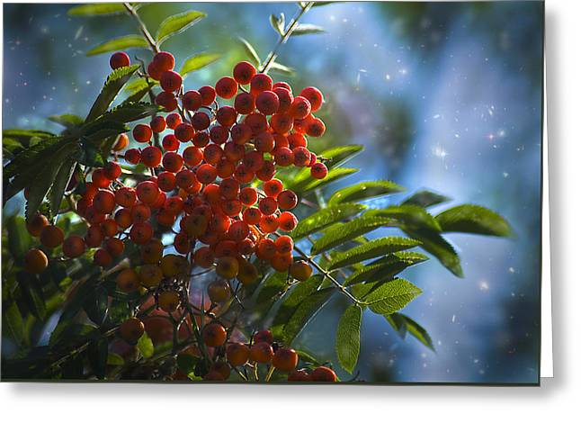 Greeting Card featuring the photograph Mountain Ash by Yulia Kazansky