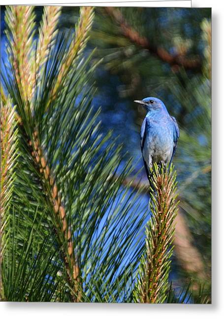 Mountain Blue Greeting Card by Annie Pflueger