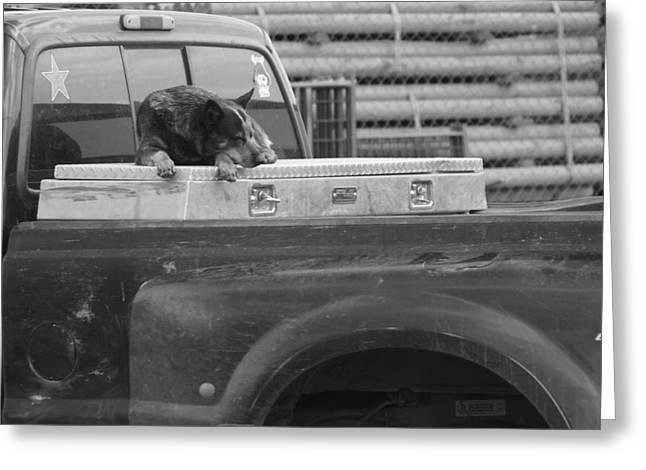 Mountain Dog Greeting Card by Debra Roberts