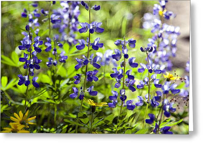 Greeting Card featuring the photograph Mountain Flowers by Kjirsten Collier