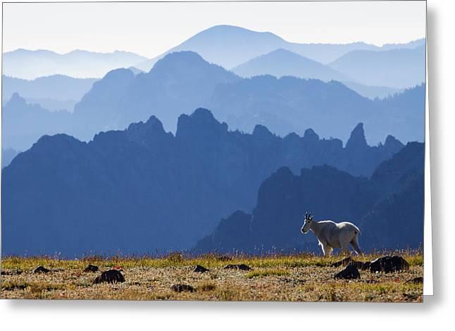 Mountain Goat, Cascade Mountain Range Greeting Card