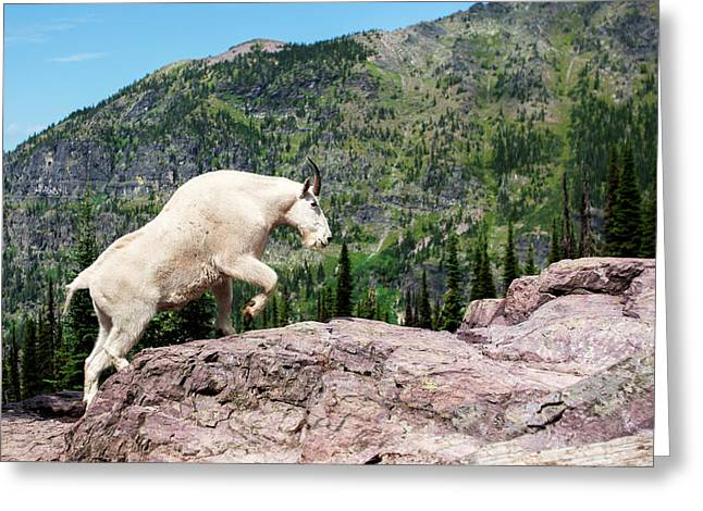Mountain Goat Climbing Rocks In Glacier Greeting Card