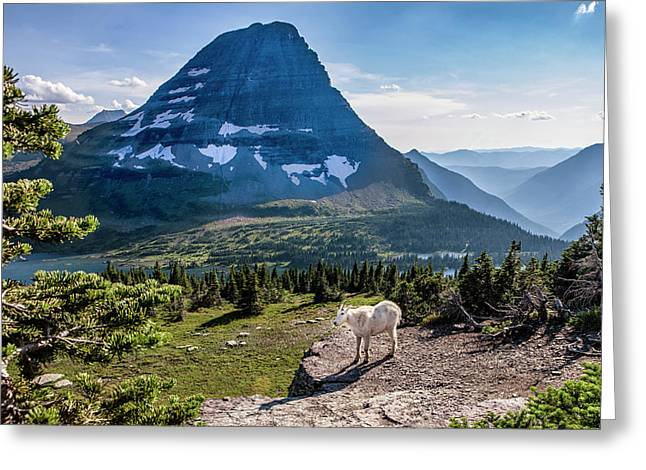 Mountain Goat In Front Of Bearhat Greeting Card