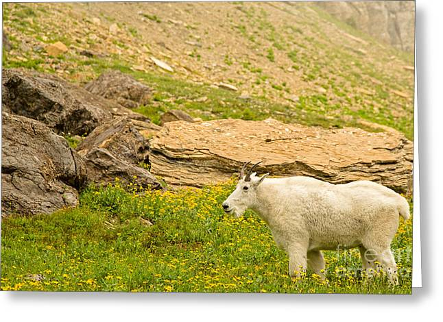 Mountain Goat In The Mountains Greeting Card by Natural Focal Point Photography