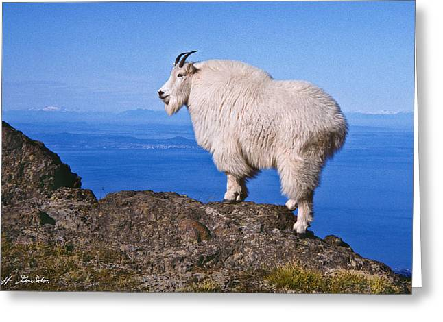 Greeting Card featuring the photograph Mountain Goat On Klahane Ridge by Jeff Goulden