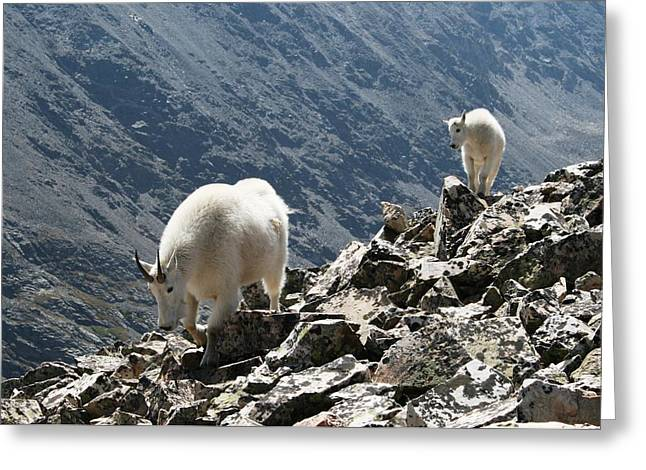 Mountain Goats 2 Greeting Card