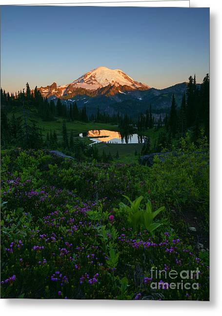 Mountain Heather Morning Greeting Card by Mike Dawson