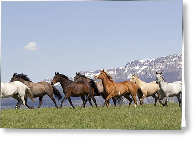Mountain Horses Greeting Card by Carol Walker