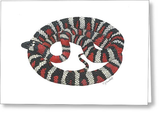 Mountain King Snake Greeting Card