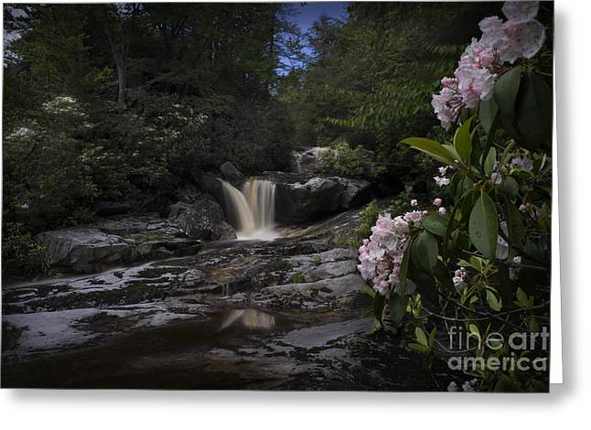 Mountain Laurel And Falls On Small Stream Greeting Card by Dan Friend