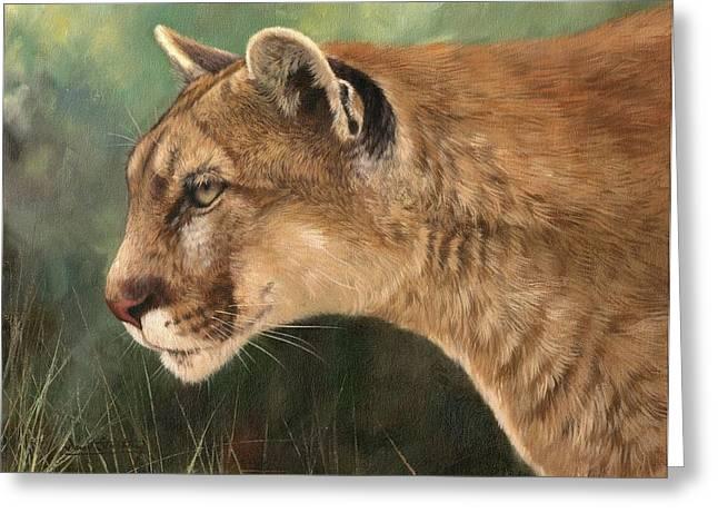 Mountain Lion Greeting Card by David Stribbling
