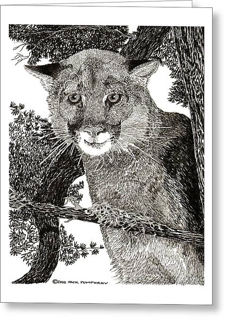 Mountain Lion Puma Greeting Card by Jack Pumphrey