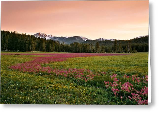 Mountain Meadow Color Greeting Card by Leland D Howard