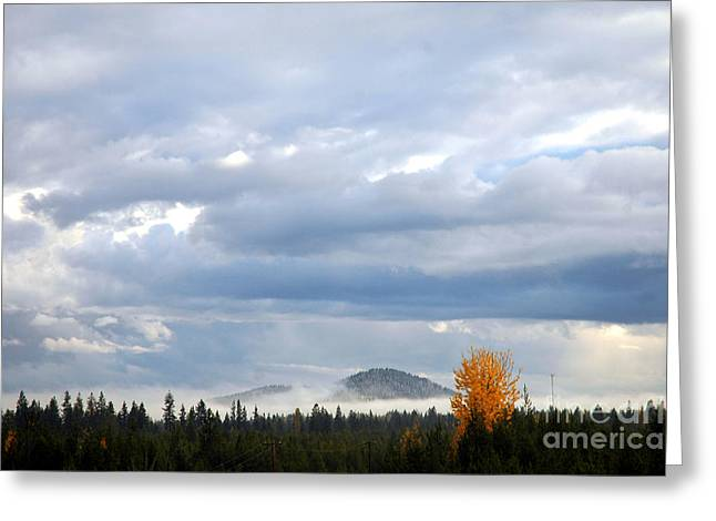 302p Mountain Mist Greeting Card