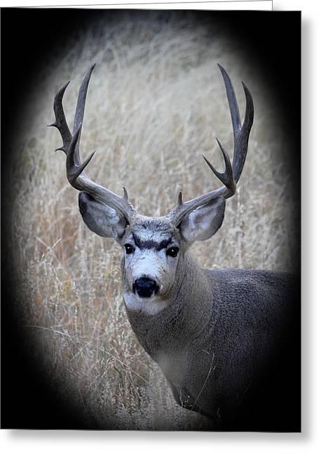 Mountain Mule Deer Greeting Card