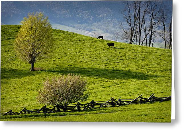 Mountain Pasture With Two Cows Greeting Card by John Pagliuca