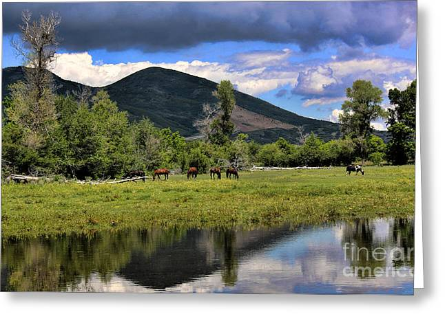 Mountain Pasture Greeting Card