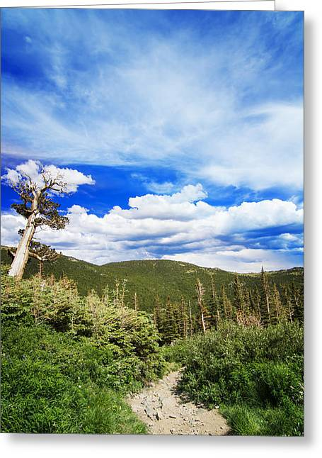 Mountain Path Greeting Card by Mark Andrew Thomas