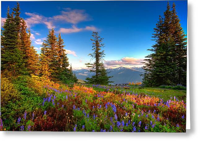 Mountain Rainier  Sunset Greeting Card