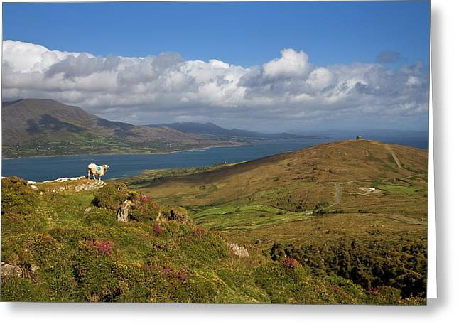 Mountain Ridge On Bear Island, Beara Greeting Card by George Munday