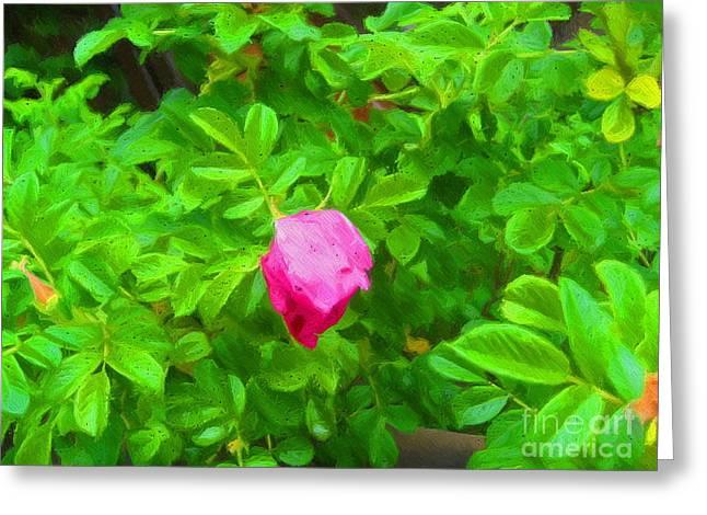 Mountain Rose Greeting Card by John Kreiter