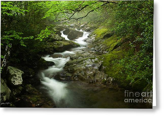 Mountain Stream 2010 Greeting Card