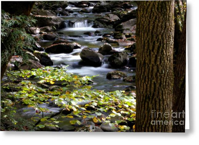 Soothing Mountain Stream In The Smoky's Greeting Card
