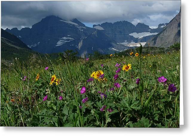 Mountain Wildflowers Greeting Card by Alan Socolik