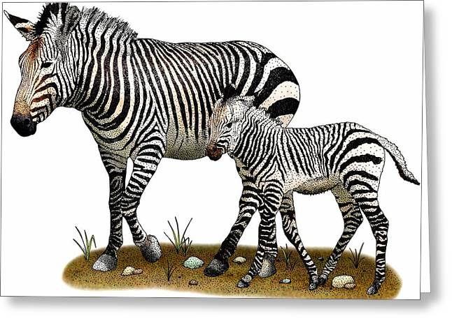 Mountain Zebras Greeting Card by Roger Hall