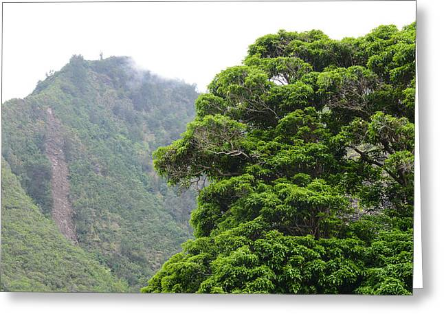 Mountains In Maui Hawaii With Fog And Tree In Foreground Greeting Card by Brandon Bourdages