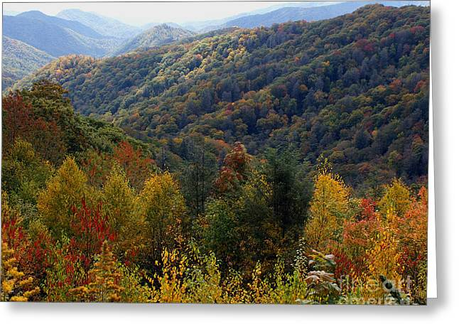 Mountains Leaves Greeting Card