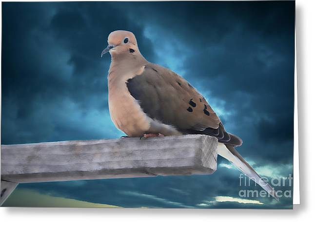 Greeting Card featuring the photograph Mourning Dove Blue Sky by Marjorie Imbeau