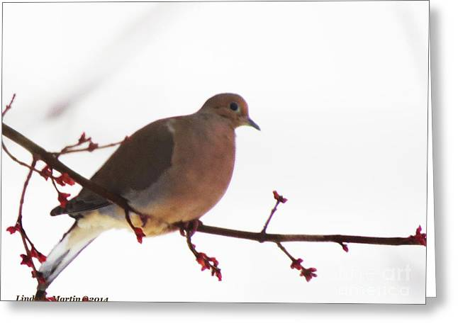 Mourning Dove In Snow Glow Greeting Card