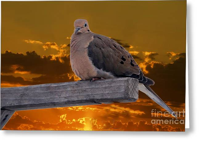 Greeting Card featuring the photograph Mourning Dove Orange Sky by Marjorie Imbeau