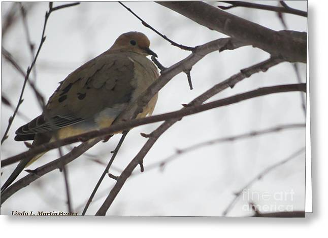 Mourning Dove Resting Greeting Card