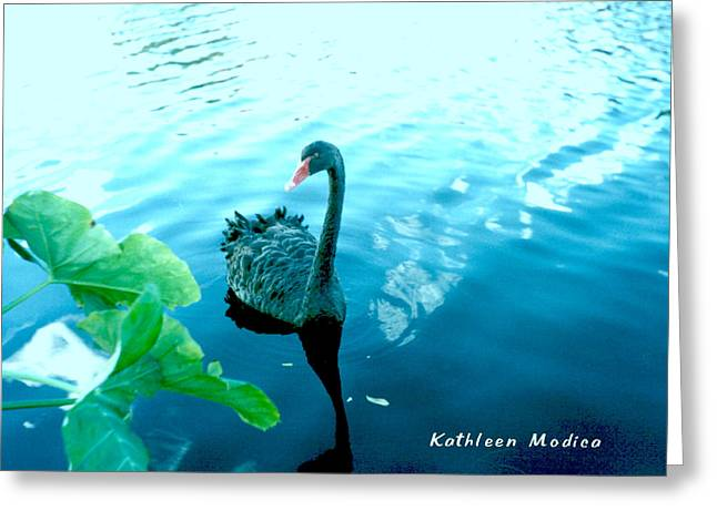 Mourning Swan Song Greeting Card