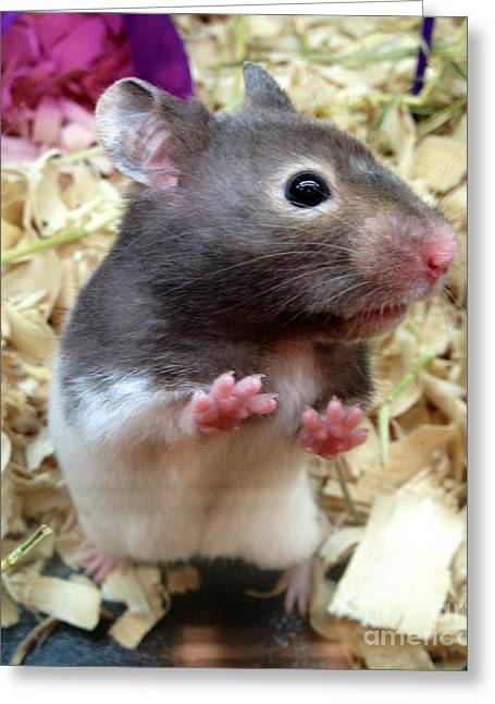 Greeting Card featuring the photograph Mouse In The House by Carla Carson