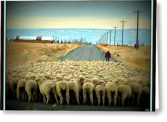 Greeting Card featuring the photograph Moving Sheep by Heidi Manly