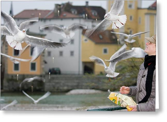 Mr A Woman Feed The Gull Greeting Card