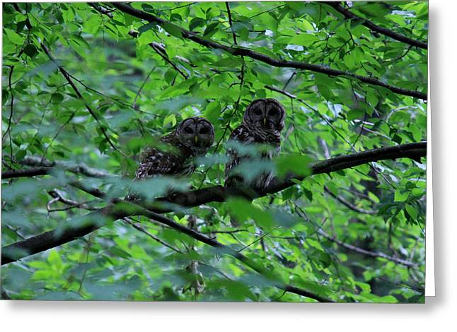 Mr And Mrs Owl Greeting Card