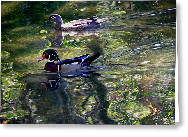 Mr And Mrs P W Duck Greeting Card by Judy Wanamaker