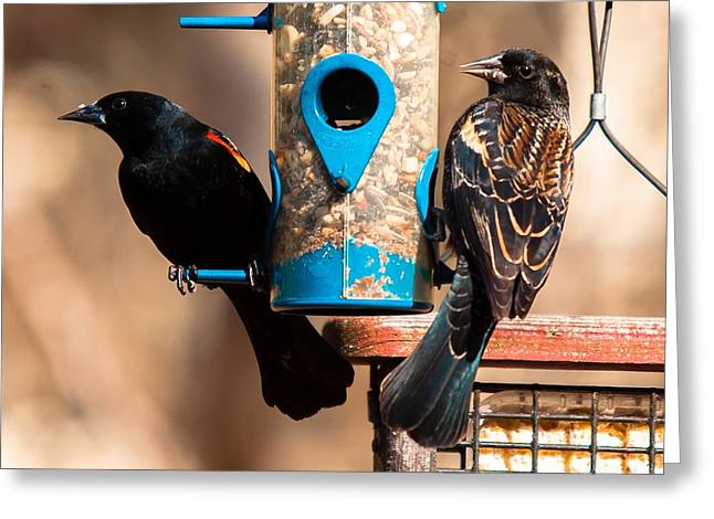 Mr. And Mrs. Red Winged Blackbird Greeting Card