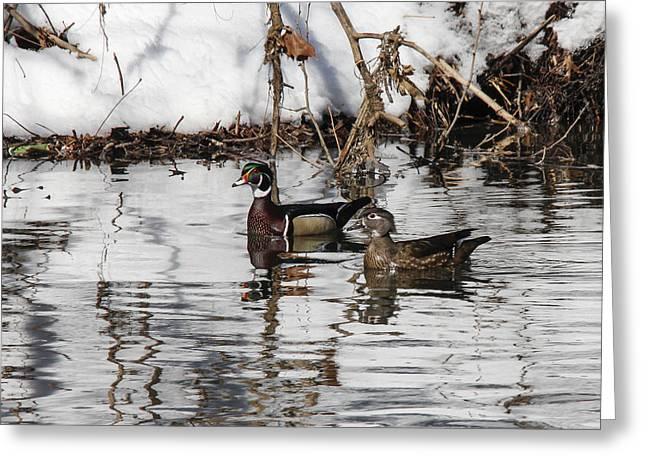 Mr. And Mrs. Wood Duck Greeting Card by Jill Bell