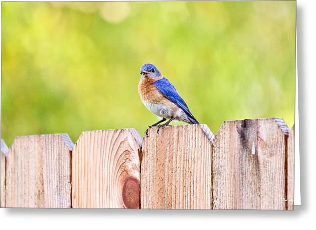 Mr. Bluebird Greeting Card by Scott Pellegrin