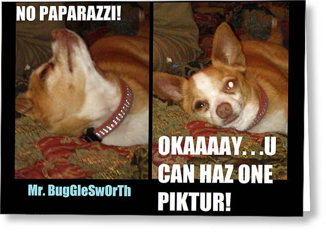 Mr. Bugglesworth  No Paparazzi Greeting Card