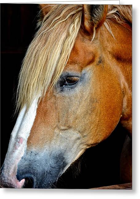 Mr Ed Greeting Card by Frozen in Time Fine Art Photography