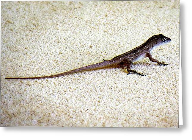 Greeting Card featuring the photograph Mr. Gecko by Pennie  McCracken