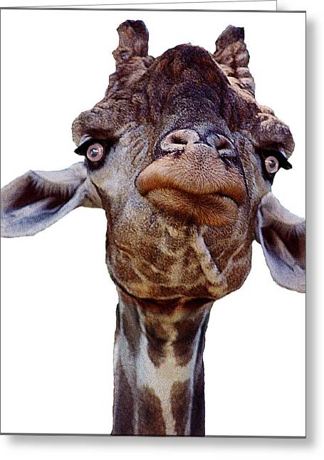 Mr. Giraffe Greeting Card